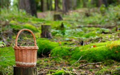 Sienestysinto nousi Oulun seudulla