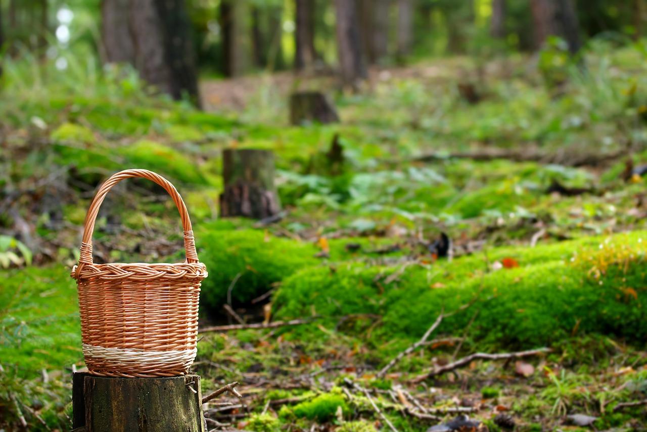 Ruskea kori vihreässä metsässä