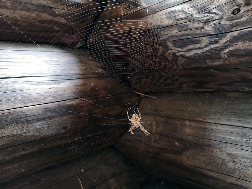 Hämähäkki verkossaan