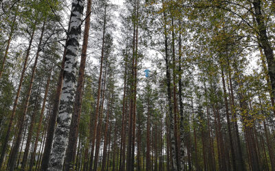 Olgan čuppuni: Šuomešta on löyvetty uuši kärväislaji, kumpani eläy meččälintujen pešissä