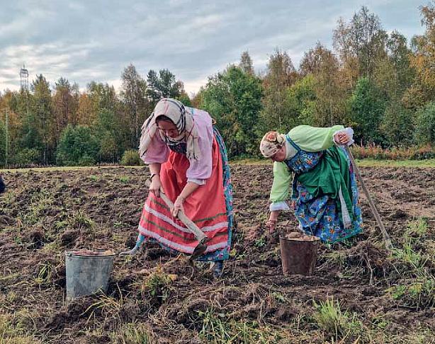 Kaksi naista karjalaisissa perinneasuissa kaivavat kuokilla perunoita mullasta